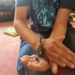 Crazy Creatures North East - Having Fun With a Scorpion