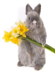 residential care homes - rabbit